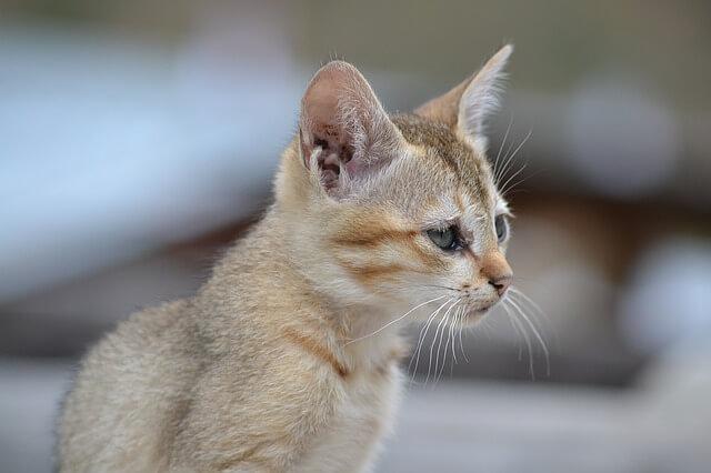 cat-1107450_640